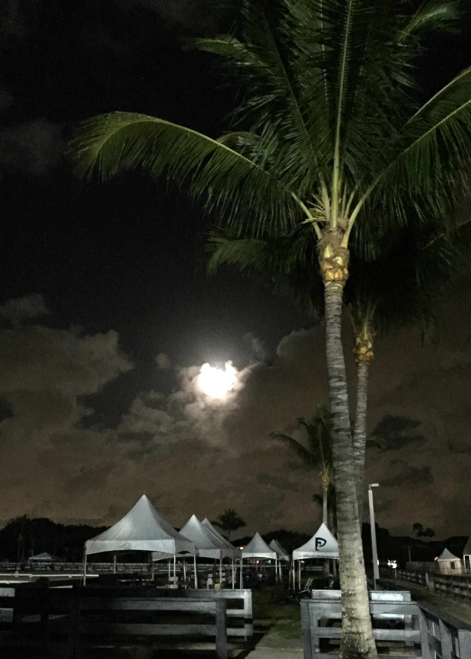 Moonrise at the Global Dressage Festival